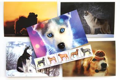 Набор «Собаки» (открытка+марка)