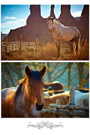 Лошади на заре